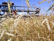 Зерновые по доступным ценам