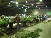 Работа за рубежом - Работа в Польше - Сортировка саженцев клубники